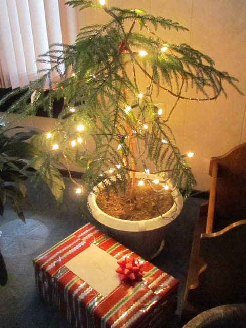 My Charlie Brown Christmas Tree