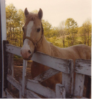Coke, my pretty little palomino Quarter Horse