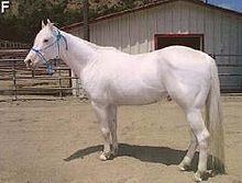 Camarillo.White.Horse