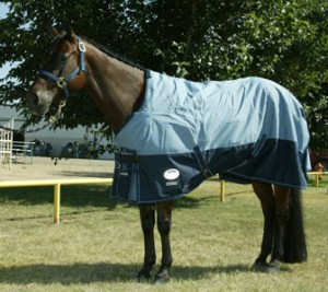 Todays Horse Facts The Blanket By Marsha Hubler
