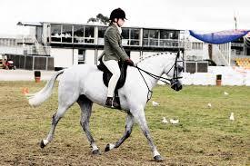Australian Pony 3