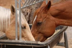 horse feed 4