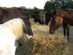horse feed 7